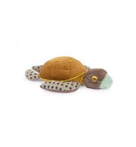 Petite tortue Tout autour...
