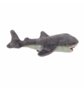 Grand requin Tout autour du...